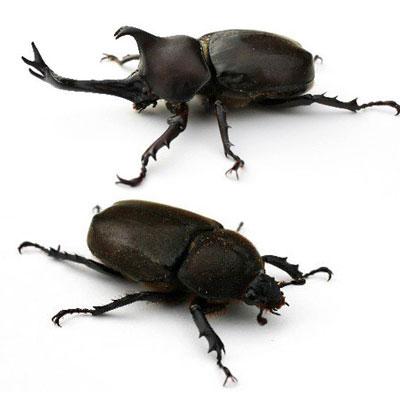 トレース疑惑の『昆虫交尾図鑑』 問題のウラに「ブラック労働」はないか